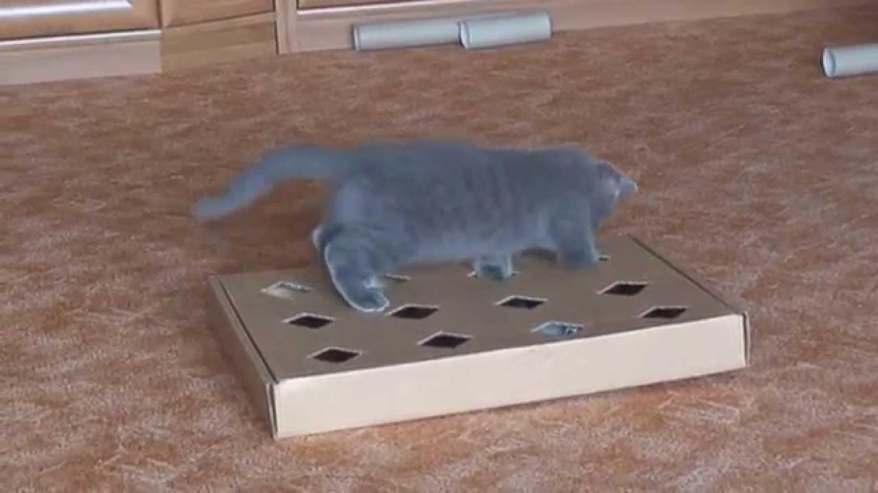 Как сделать котёнку игрушку в домашних условиях