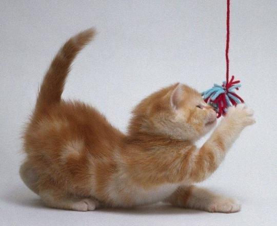Игрушки для котят своими руками: самодельные безделушки с фото и видео
