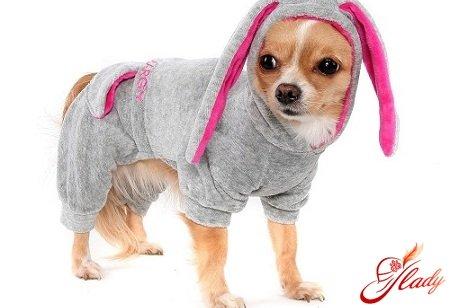 Как сшить одежду для собаки чихуахуа своими руками