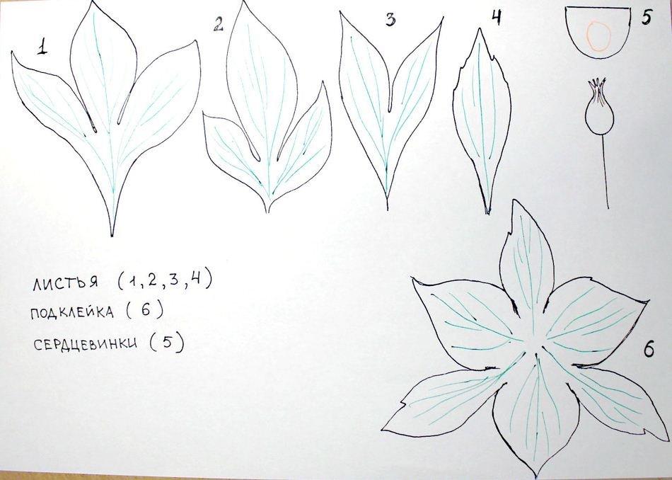 Выкройка для цветов из гофрированной бумаги своими руками