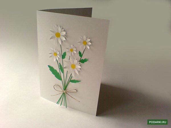 Комнатные цветы 4