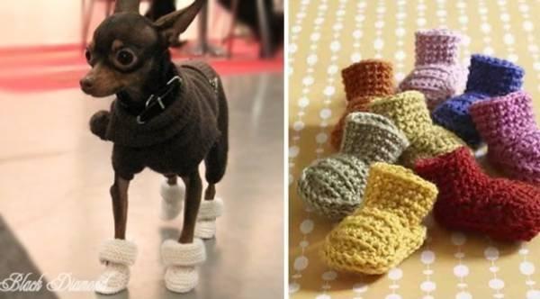 Вяжем для собак маленьких пород видео