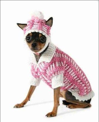 Вяжем для собак маленьких пород спицами