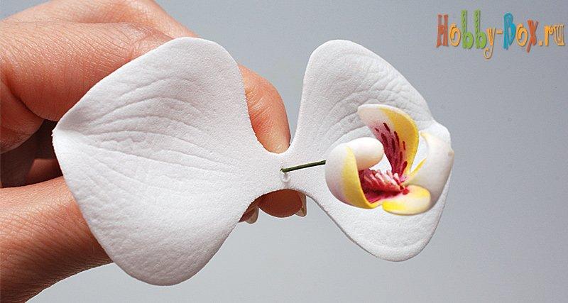 Орхидеи из фоамирана: выкройки и мастер класс своими руками