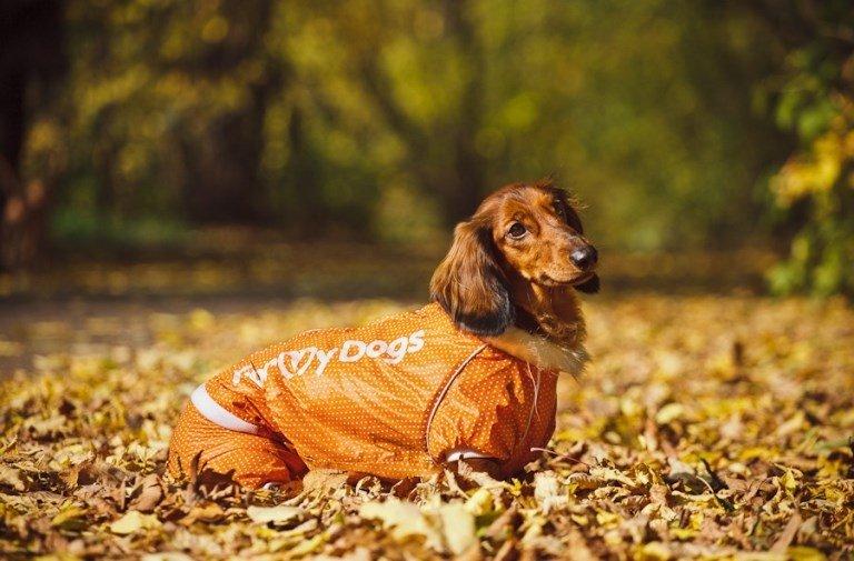 Одежда для собак своими руками выкройки фото 980