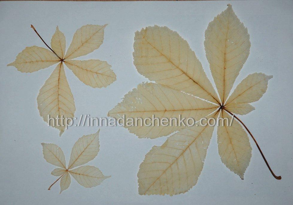 Скелетирование листьев в домашних условиях: мастер класс поделки c фото