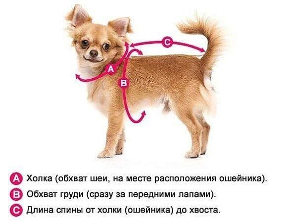 Комбинезон для собаки: выкройки и мастер класс с пошаговыми фото и видео для начинающих