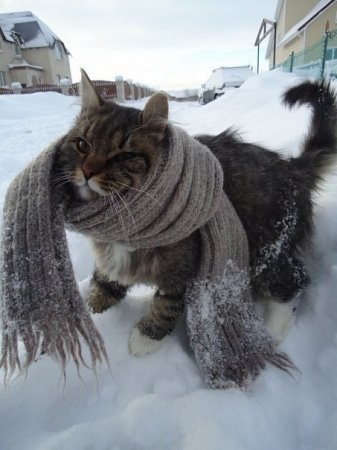1379271067_viajem-zimnii-sharf Мастеркласс как связать шарф