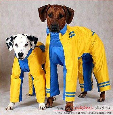 1464097600_dcc4ae132c17be21bee05ea980c96f0e Одежда для собак своими руками
