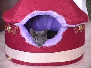 Оригами кошка, которая порадует вас в любые дня недели и станет прекрасным украшением вашего интерьера