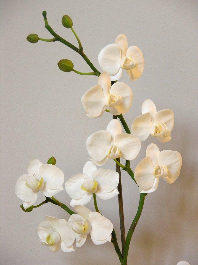 1487279782_72999131 Мастер класс: орхидея ангулоя из фоамирана