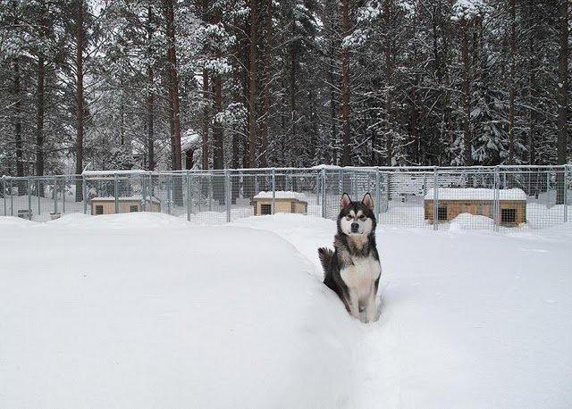 Подстилка для собаки своими руками
